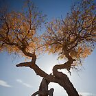 populus euphratica 05 by hkavmode