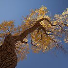 populus euphratica 06 by hkavmode
