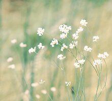 Meadow Bloom by BudhiMukha  Studio