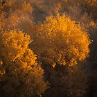 populus euphratica 10 by hkavmode