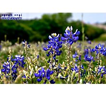 The Heart of Texas Photographic Print
