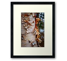Shredded Bark Framed Print