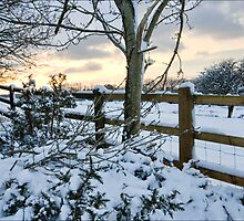 The snow fence  by DIANE  FIFIELD