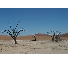 Tree in Sossusvlei, Namibia Photographic Print