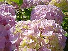 Floral Hydrangea Flowers Garden art Baslee Troutman by BasleeArtPrints