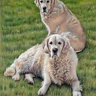 Gina &amp; Boomer Golden Retriever by Nicole Zeug