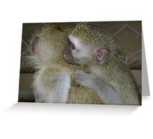 Orphan Vervet Monkeys Greeting Card