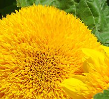 Yellow Floral Sunflowers Garden art Baslee Troutman by BasleeArtPrints