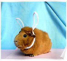 Easter Piggy Poster