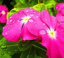 Petunias after the Rain by Susan Blevins