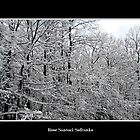 Snow scene #4 by Rose Santuci-Sofranko
