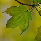 Spring green by Nathalie Chaput