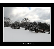 Snow covered trees on a knoll Photographic Print