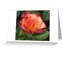 Anniversary rose! Greeting Card