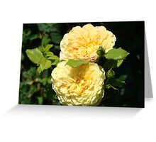 Beautiful Double Rose Yellow Peach Rose Flowers art Greeting Card