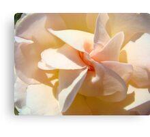 Spiral Rose art Floral Peach Pink Rose Flower Baslee Canvas Print
