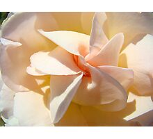 Spiral Rose art Floral Peach Pink Rose Flower Baslee Photographic Print
