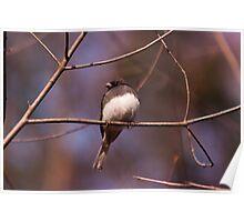 Bird type unknown - Ottawa, Ontario Poster