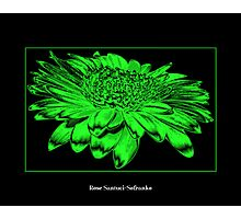 Gerbera Daisy ( Chrome - Toxic Effect ) Photographic Print