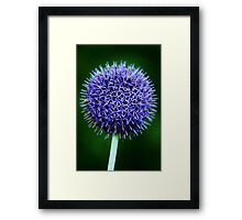 Blue Thistle Framed Print