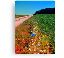 Summer flowers along the trail Canvas Print