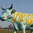 cow in field by Steve