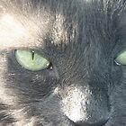My Amazing Wonderful Little Cat (4) by Susan  Morry