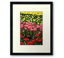 The famous dutch tulip fields Framed Print