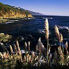 Big Sur Coast by peterchristian