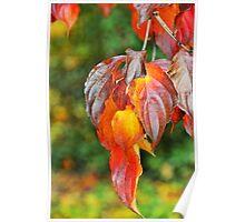 autumnal cascade Poster