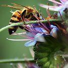 Malibu Beach Bee by loiteke