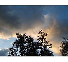 Bird Watching at Sunrise Photographic Print