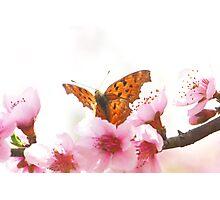 comma Photographic Print
