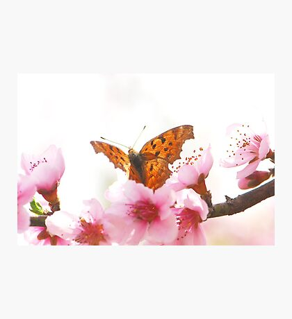 comma Photographic Print