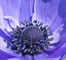 Purple Flower by Jean Gregory  Evans