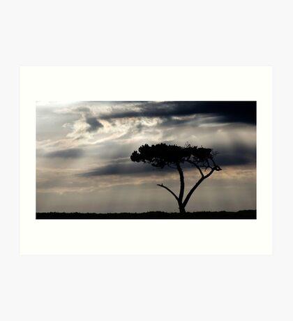One Tree Hill - Northland, NZ Art Print