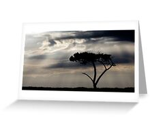One Tree Hill - Northland, NZ Greeting Card