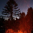 Forest Fire by FarWest