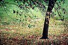 ~ Autumn Carpet ~ by Lynda Heins