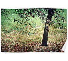 ~ Autumn Carpet ~ Poster