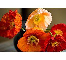 Multi coloured poppies Photographic Print
