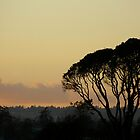 Sunset Victoria BC by sprucedimages