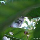 INNOCENT CAT by amar singh