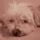 Pooped Puppy by Wilhelmina