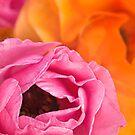 Hot colors by Celeste Mookherjee