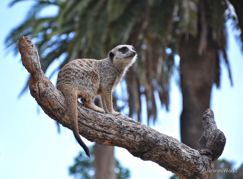 Meerkat Mania! by JaninesWorld