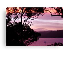 Pittwater Musk Canvas Print