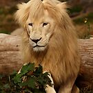Lion - Bad Hair Day by Daniela Pintimalli