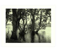 Lake Ainswoth - Lennox Head  Art Print