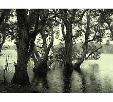 Lake Ainswoth - Lennox Head  Photographic Print